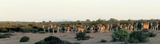 cropped-img_1753-copy-elande.jpg