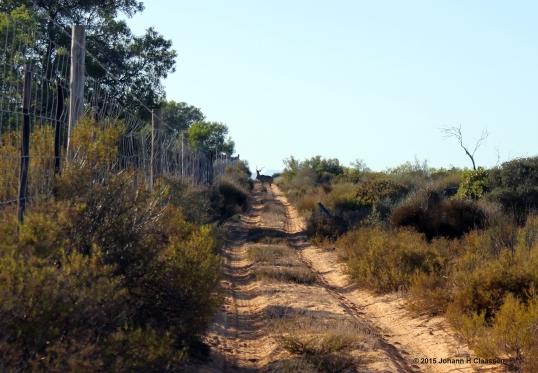 IMG_1816 - Copy Kudu